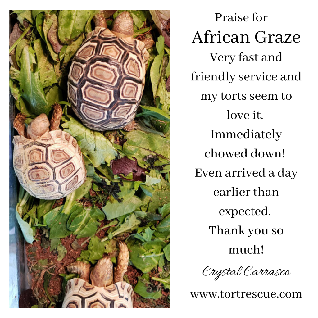 African Graze custome review